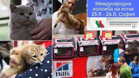 Международна изложба на котки – 25 и 26 ноември, София