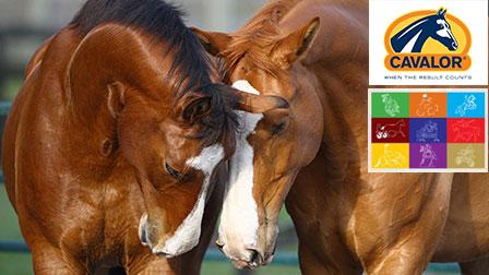 CAVALOR – партньор на Първия конен фестивал