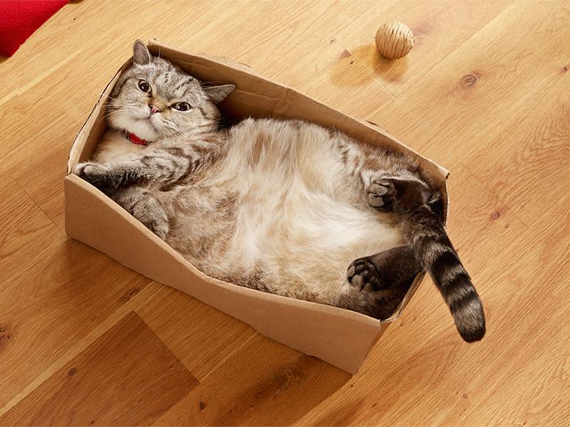 Помощ, котката ми е с наднормено тегло!