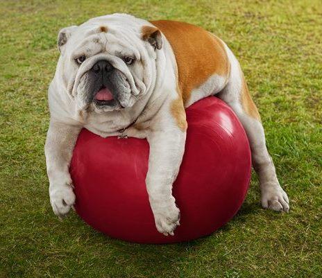 С наднормено тегло ли е кучето ми?