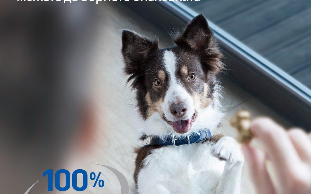 Kак да възнаградите кучето си?