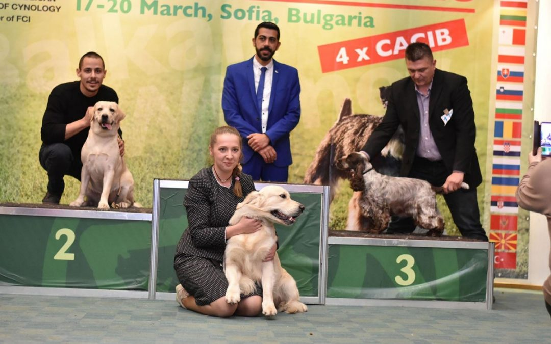 Специализирани изложби на кучета CACIB, София