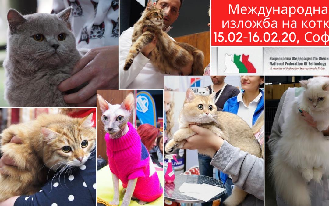 Международна изложба на котки – 15-16.02.2020, The Mall София