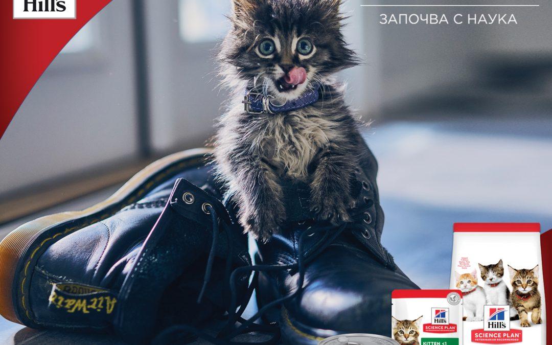 Специални оферти на Hill's за подрастващи котки