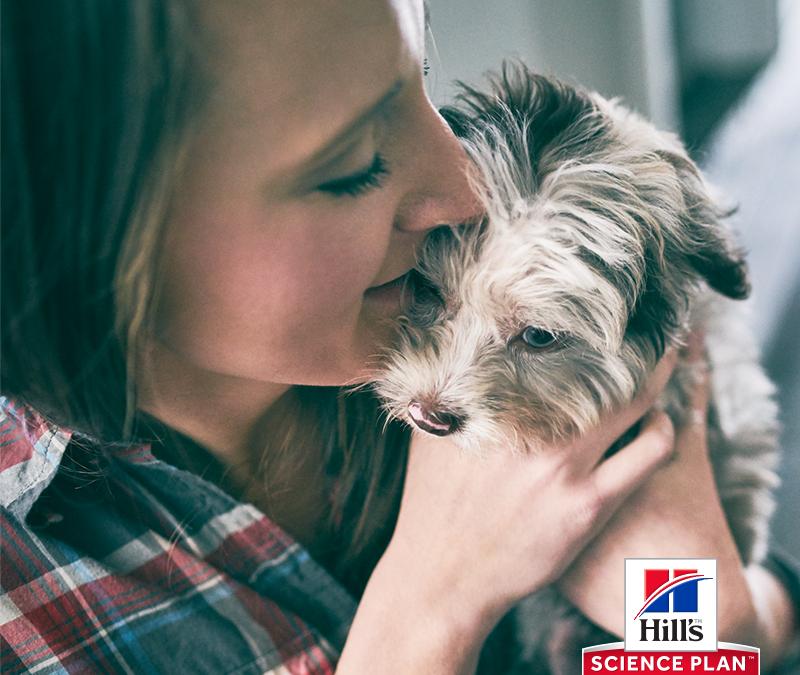 Как и кога да храните Вашето кученце?