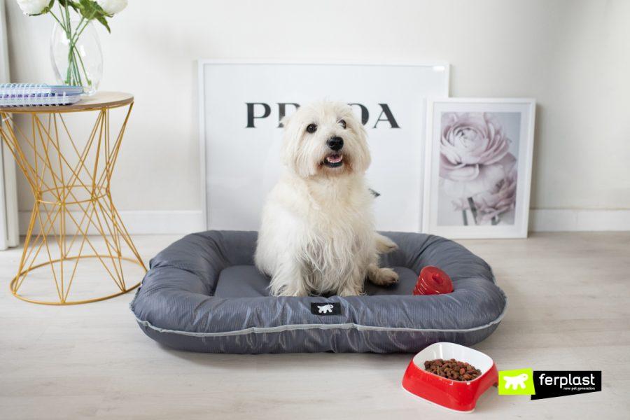 Неразрушими легла за кучета!