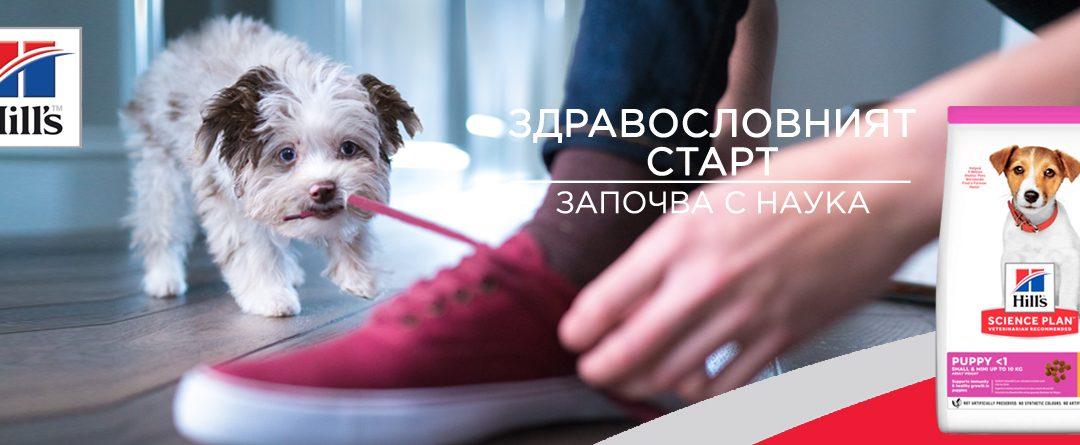 Гратис килограми за подрастващи кучета от мини породи през октомври