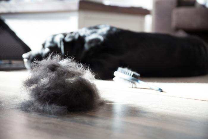Как най-добре да контролираме падането на козината на Вашето куче или котка?